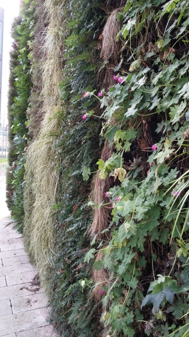 Very nice green wall at Uni